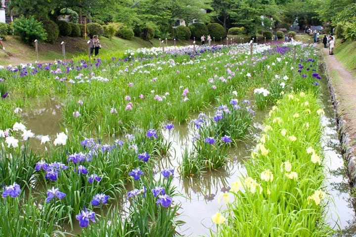 Ingin Melihat Sakura yang Indah dan Berbagai Tempat Menarik Lainnya? Datanglah ke Yamaguchi!