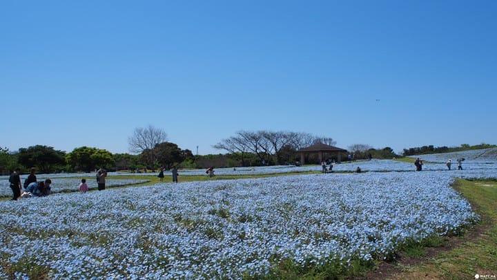 【福岡】全家笑嘻嘻!貼近自然與動物的海之中道-海濱公園