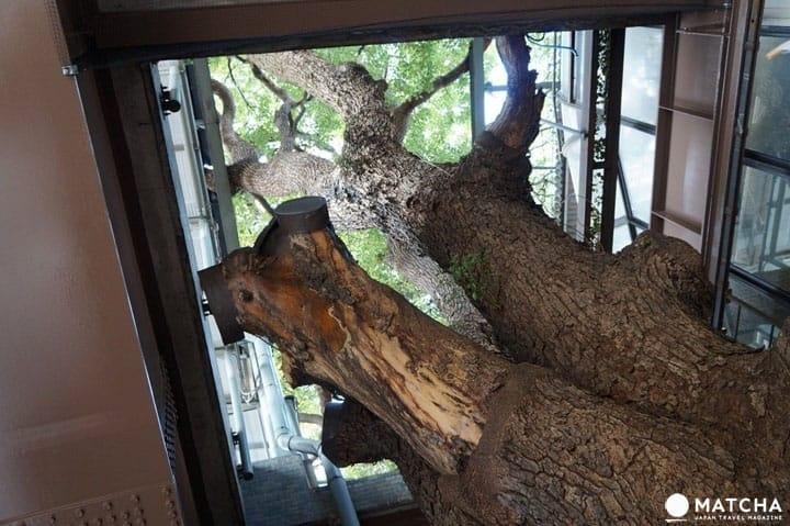 Osaka's Kayashima Station: See A 700 Year Old Tree On The Platform!