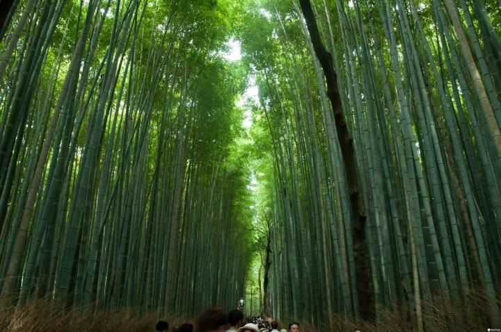 漫步岚山,感受京都人也爱的静谧氛围:景点美食推荐