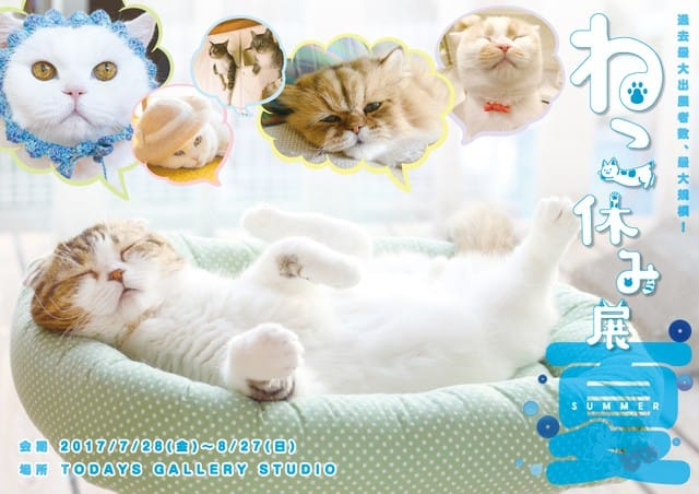 跟著貓咪一起放暑假!東京都淺草橋「ねこ休み展 夏 2017特展」