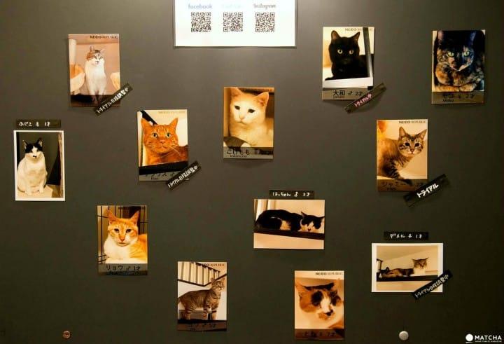 cats at neco republic ikebukuro