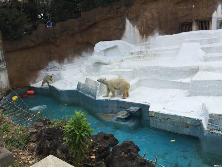 天王寺北極熊(2)