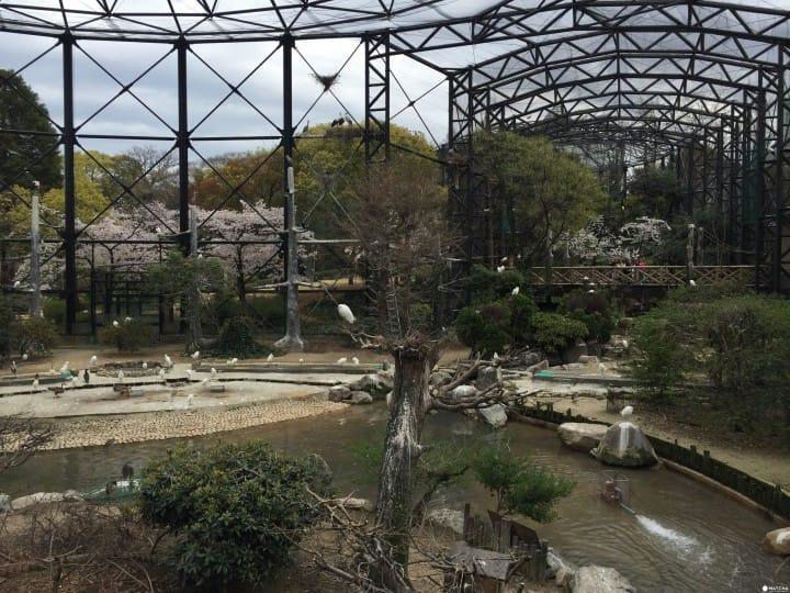 天王寺動物園鳥園(2)