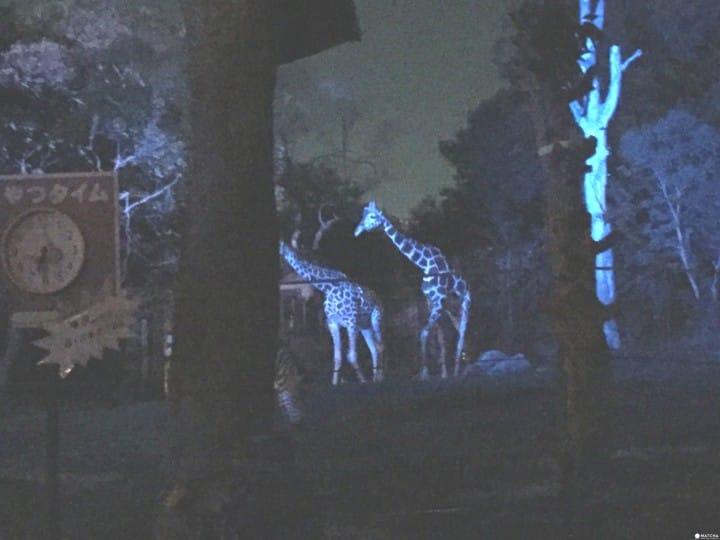 天王寺動物園夜間開放