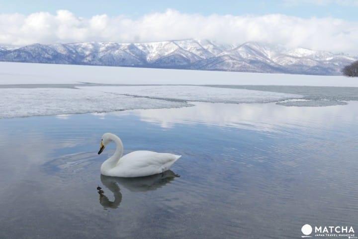 『北海道 道东』根本就是画啊!搜集道东三湖美景