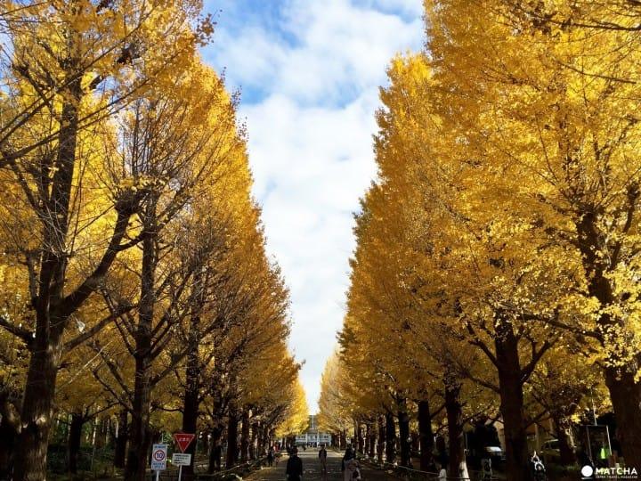 連接澀谷到橫濱,「東急東橫線」沿線必訪景點9選