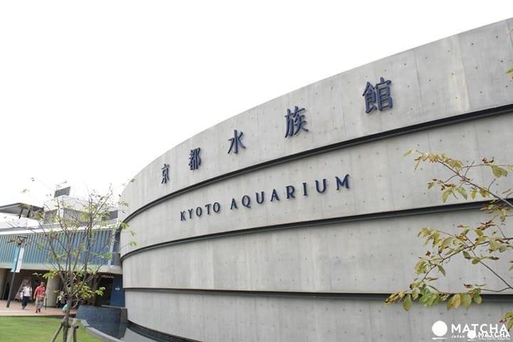 京都不只有寺廟!近京都站的京都水族館
