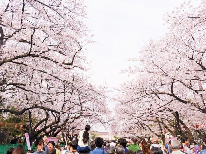 【东京赏樱】一篇上手!新宿御苑&上野公园两大赏樱景点、周边美食攻略