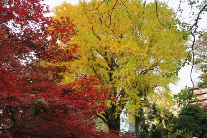 See The Vivid Colors Of Autumn In Tokyo: 4 Best Spots