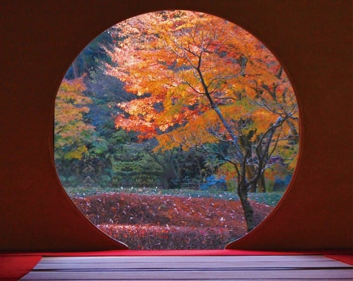 Kamakura's 4 Best Autumn Leaves Spots In 2017 - Temples, Parks And More!