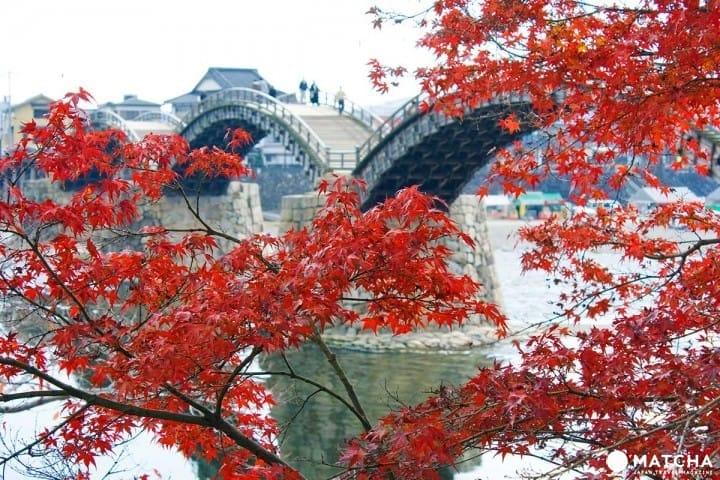 【山口縣】錦帶橋與吉香公園,給你春的浪漫秋的美貌!
