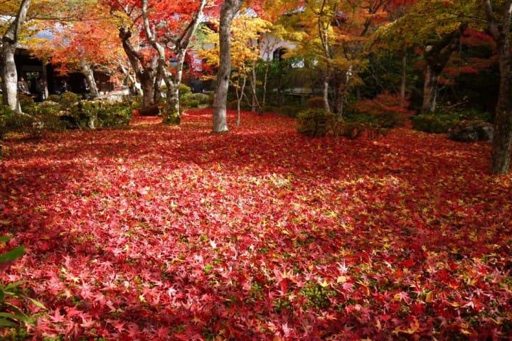 关西赏枫泡汤!神户有马温泉及关西红叶情报整理