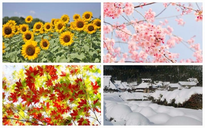 Weather In Japan - The Year Round Climate And Temperatures