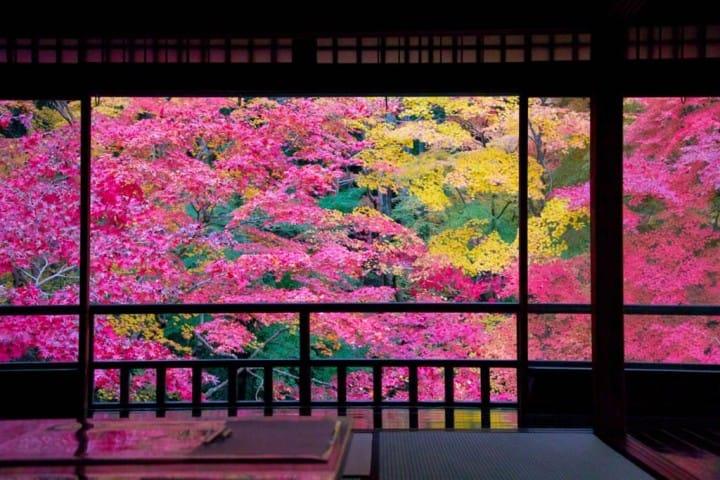 (ฤดูใบไม้ร่วงญี่ปุ่น) เช็คให้พร้อม! สภาพอากาศ การแต่งตัว และที่เที่ยวใบไม้แดง เดือนตุลาคม-พฤศจิกายน