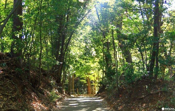 A Walk Through Totoro's Forest In Saitama