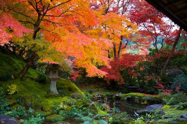Kyoto's Rurikoin Temple: Artistically Tinted Autumn Leaves
