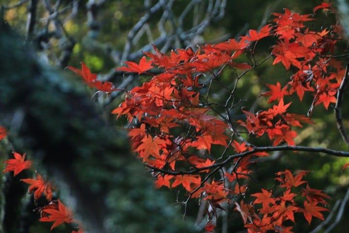 Menikmati Keindahan Berbagai Tumbuhan Empat Musim di Taman Kuil Kinpeizan Zuisenji, Kamakura