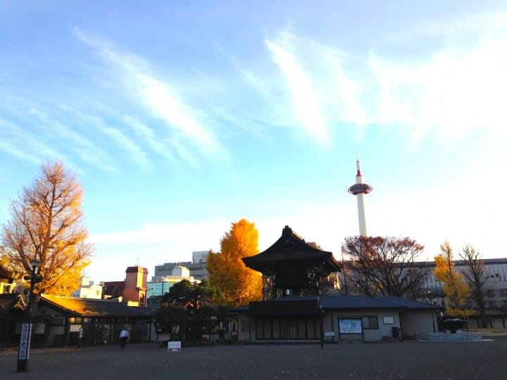 秋季限定!被金色銀杏覆蓋的老城市 京都銀杏名所推薦