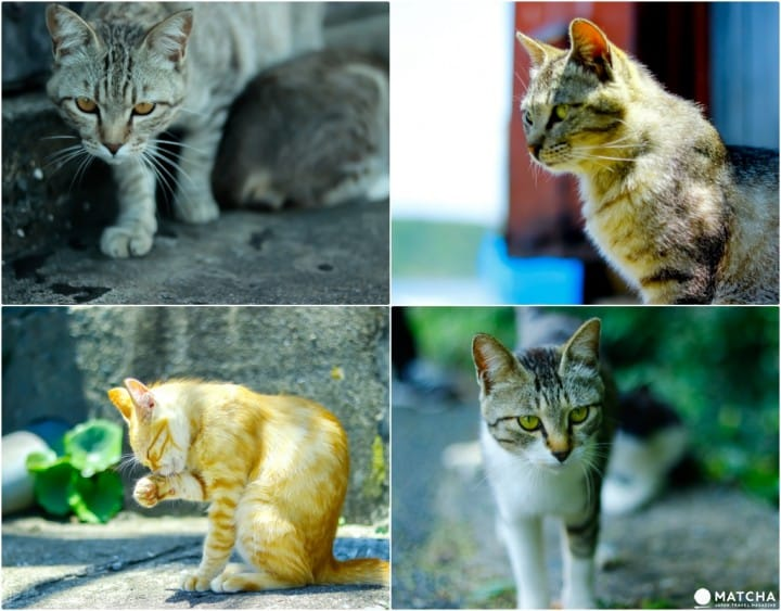 Fukuoka's Ainoshima: Take Photos At One Of The World's Best Cat Spots!