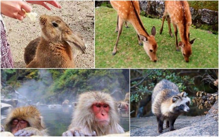 Mèo, thỏ, hươu, chim, cá heo ~ Gặp gỡ các loài động vật hoang dã của Nhật!