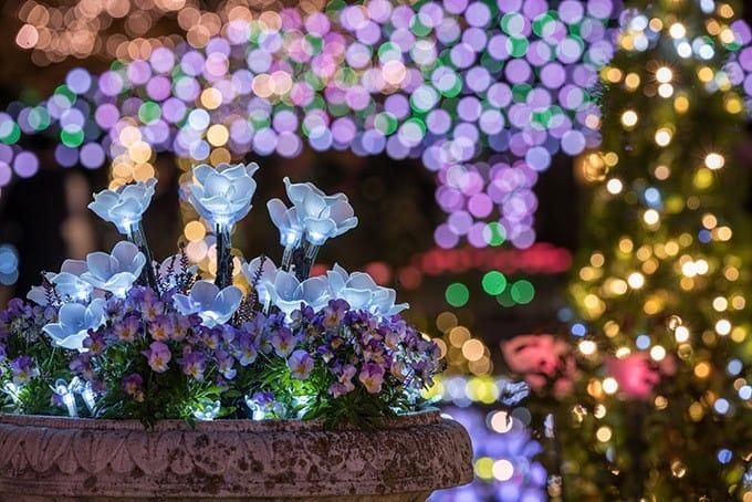 足利花卉公園點燈