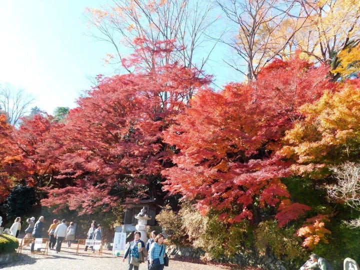 Reds, Oranges And Golds - Come Relish The Fall Colors In Ibaraki!