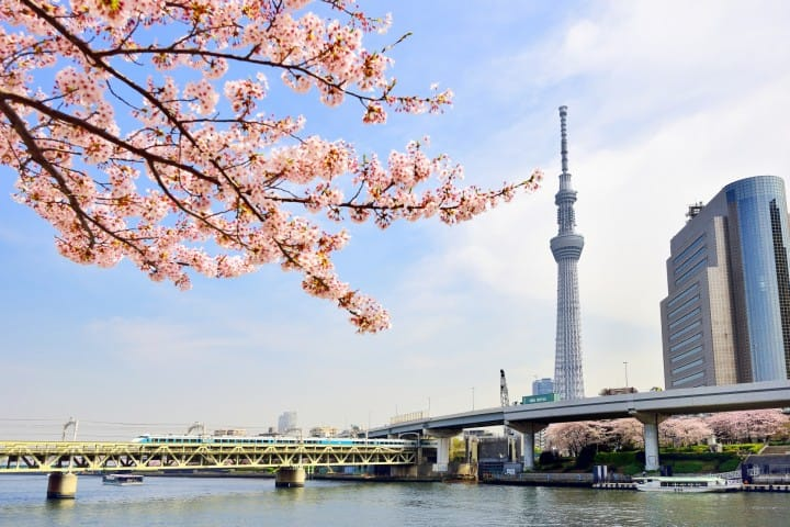 Part 1: Cherry Blossom Spots Along The Sumida River