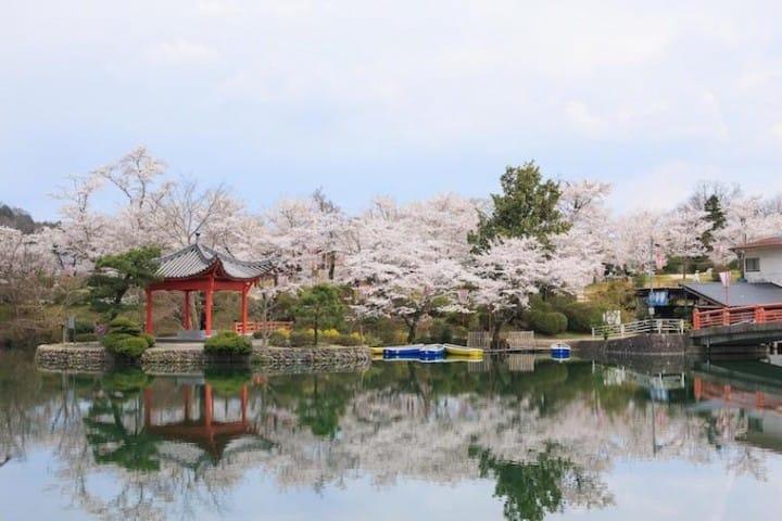 13 Top Cherry Blossom Spots Near Hiroshima, Tottori, And Shikoku