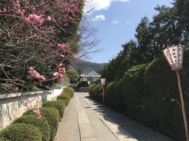 【京都】初春賞梅散策,三大賞花名所推薦