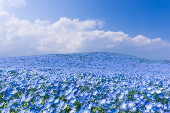 10 great places to view spring flowers around japan matcha japan 10 best spots to view spring flowers around japan mightylinksfo
