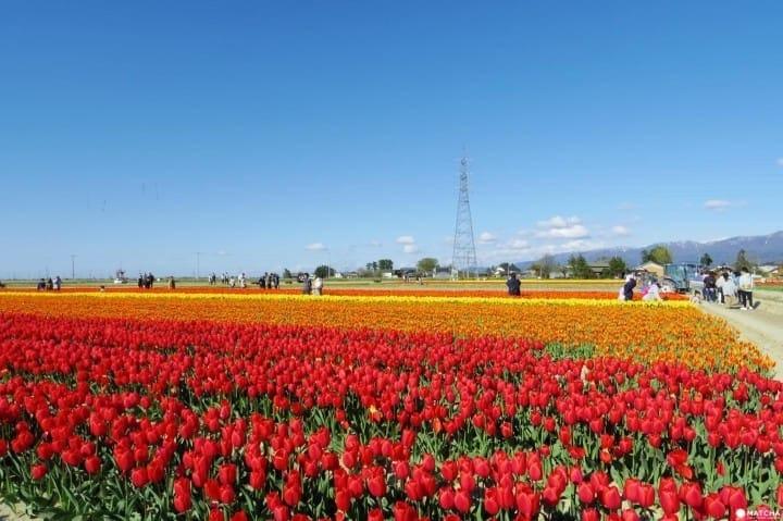 10 great places to view spring flowers around japan matcha japan 10 best spots to view spring flowers around japan mightylinksfo