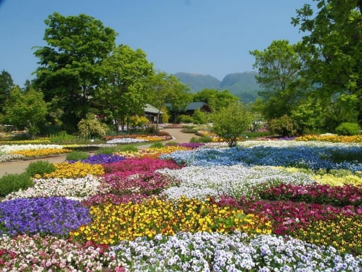 10 Great Places To View Spring Flowers Around Japan Matcha