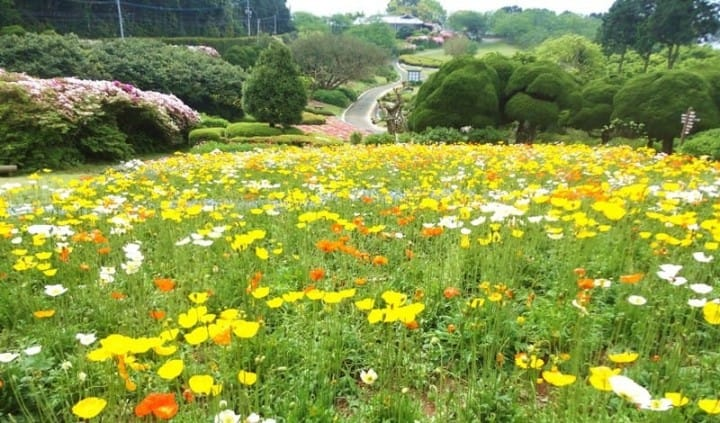 10 Great Places To View Spring Flowers Around Japan