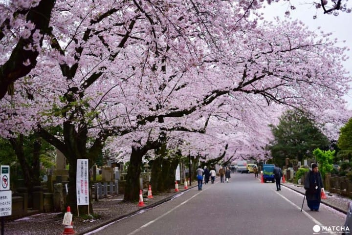 賞櫻谷中靈園