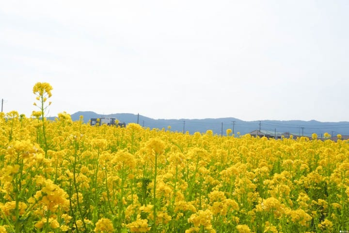東京近郊 春天絕景