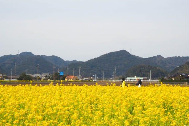 東京近郊 春天景點