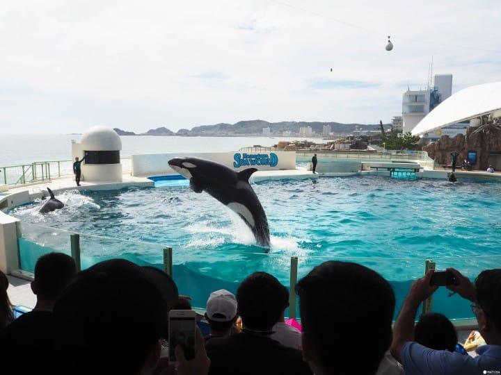 日本千葉鴨川海洋世界