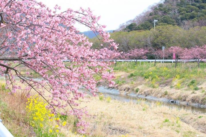 東京近郊 千葉賞櫻景點