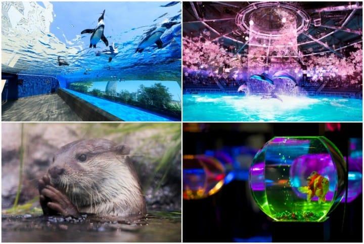 東京水族館