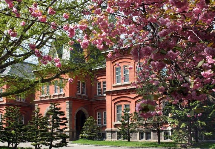 【北海道】都会赏樱4选!跟着札幌市民樱花树下野餐去