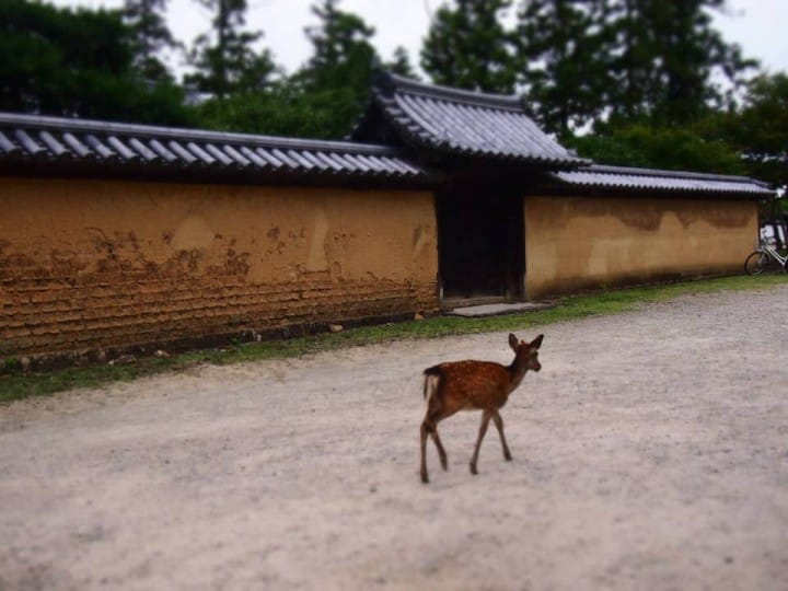 The Mysterious Historical City Of Nara