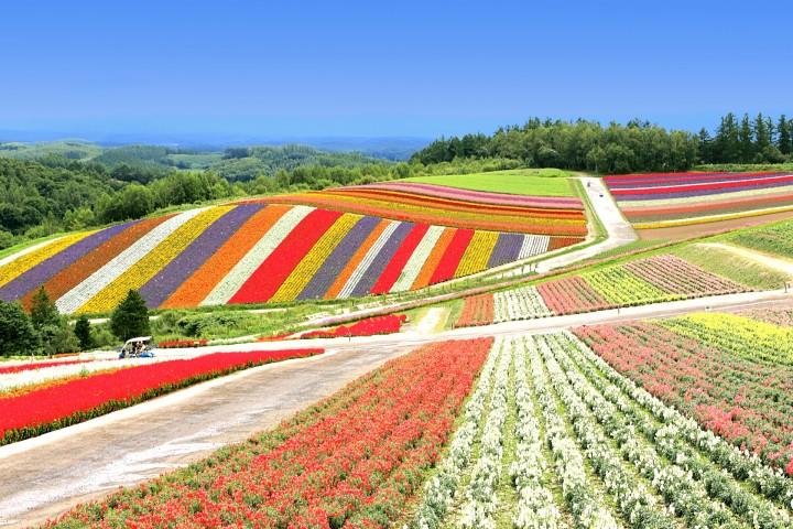 北海道夏天衣服如何准备?6~8月夏季旅行建议及常见问题