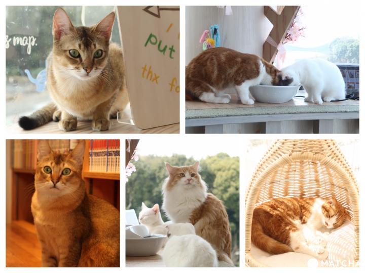 """与猫咪共度时光,爱猫的你一定要来""""猫咖啡 MOCHA 原宿店"""""""