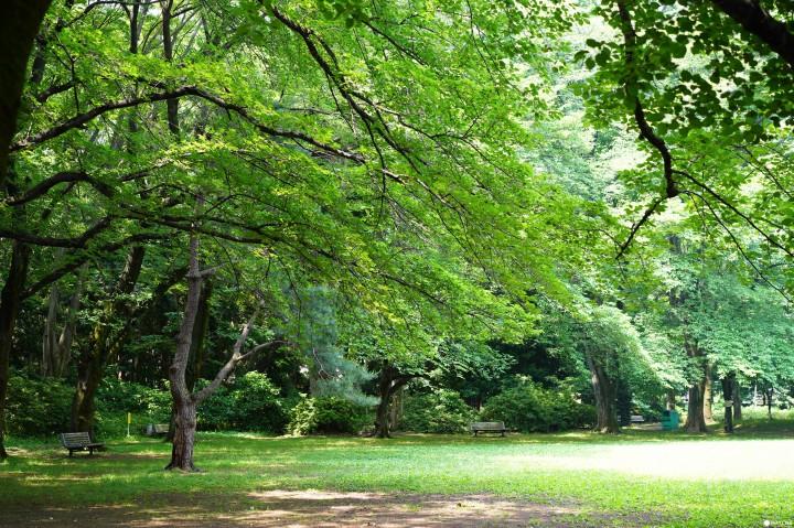 駒場東大前站:駒場公園・日式庭園