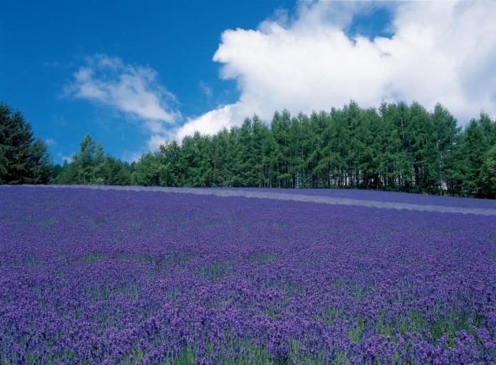 季節によって違う景色が楽しめる、富良野・美瑛でやりたい8のこと