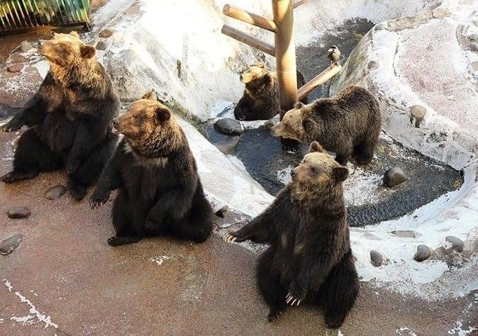 พบกับเหล่าหมีสุดน่ารักที่
