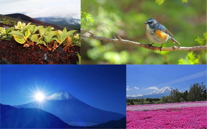 【保存版】富士登山完全ガイド〜準備から旅程まで〜