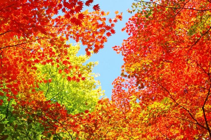 Autumn In Japan 2020 – How To Enjoy The Fall Foliage Season   MATCHA -  JAPAN TRAVEL WEB MAGAZINE