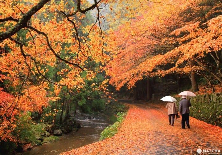 秋季旅行看這裡!值得一去的廣島紅葉觀賞景點 Top5【2020年版】